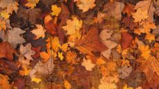 happy-thanksgiving-a-thankful-heart-500x325