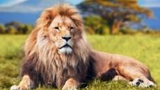 aslan-500x325