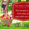 what-harvest-means-to-my-family-500x325 (1)