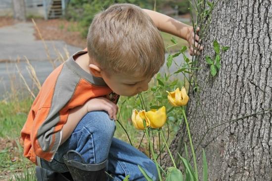 boy smelling tulips